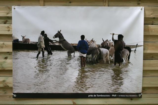 L'âne au Mali