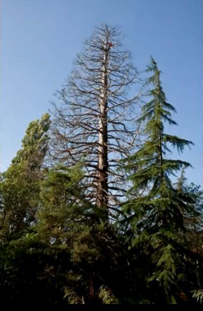 Démontage séquoia