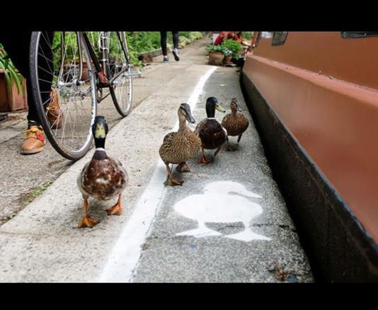 Voie pour canards